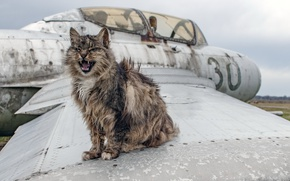 Picture cat, background, the plane