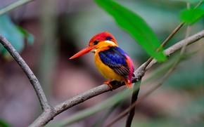 Picture leaves, nature, bird, branch, bird, bokeh, Kingfisher