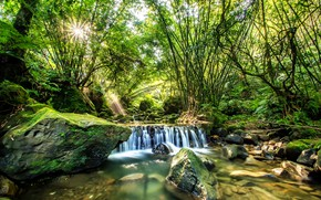 Picture forest, summer, the sun, nature, waterfall, stream