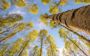 Wallpaper nature, trees, the sky