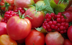 Picture autumn, berries, harvest, vegetables, tomatoes, the garden, many, cottage, Kalina, red
