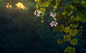 Picture flowers, nature, foliage, bokeh