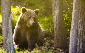 Picture Trees, Forest, Bear, Animal, Sitting, Nature