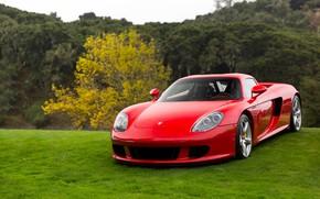 Picture Porsche, Red, Carrera