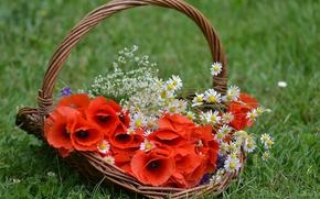 Picture grass, Maki, chamomile, basket