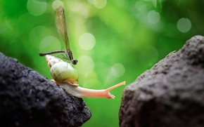 Picture greens, nature, glare, stones, background, snail, dragonfly, bokeh