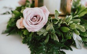 Picture flower, leaves, pink, gentle, rose