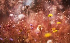 Wallpaper grass, macro, flowers, treatment, bokeh