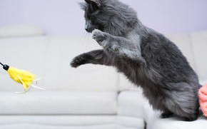 Wallpaper cat, jump, toy, the game, paws
