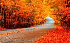 Wallpaper leaves, autumn, trees, road