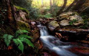 Wallpaper forest, stones, stream, fern, nature