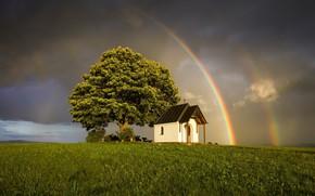 Picture tree, rainbow, temple
