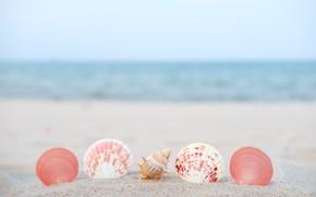 Picture sand, sea, summer, nature, tropics, shell, summer, sea, nature, sand, tropics, seashells