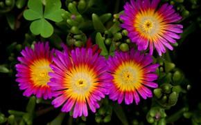 Picture leaves, nature, petals, garden