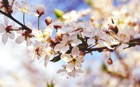 Wallpaper macro, flowers, nature, spring, buds, branch, flowering