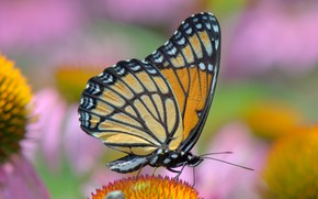 Picture butterfly, brightness, colors