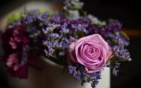 Picture rose, focus, blur