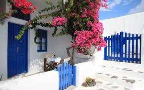 Wallpaper Flowers, bougainvillea, Flowers, Greece, Santorini, gate, Yard, House, Greece, wicket, Santorini