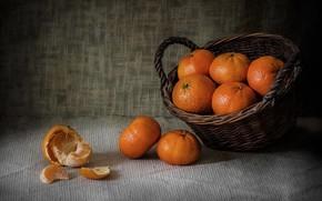 Picture basket, food, slice, citrus, fruit, still life, basket, tangerines