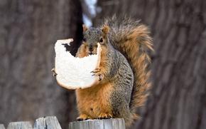 Picture nature, protein, bread