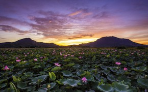Picture landscape, sunset, mountains, nature, lake, Lotus