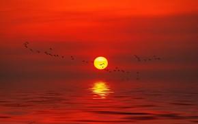 Picture sea, the sky, the sun, sunset, birds