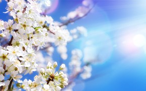 Picture the sky, the sun, flowers, branches, spring, Apple, flowering, sky, blossom, flowers, spring