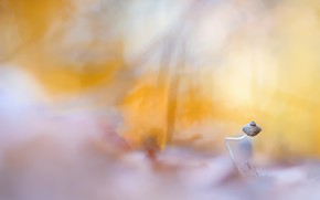 Picture nature, background, mushroom