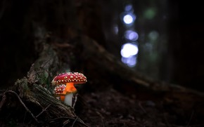 Picture forest, nature, mushrooms