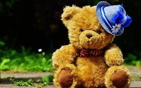 Picture hat, teddy bear, Teddy bear