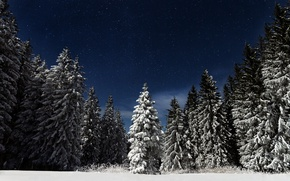 Wallpaper forest, the sky, stars, snow, night, nature