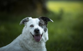Picture language, background, each, dog