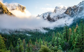 Picture trees, mountains, fog, Nature