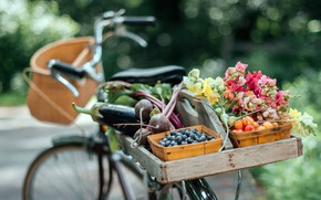 Picture bike, food, fruit, bountiful summer