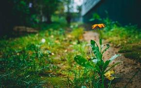 Picture flower, summer, nature, heat
