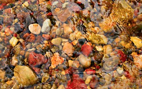 Picture water, stones, texture