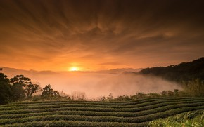 Picture field, landscape, nature, beauty, morning