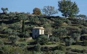 Picture trees, France, slope, Alps, house, Upper Provence