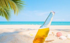 Picture sand, sea, beach, summer, palm trees, stay, beer, shell, summer, beach, vacation, sea, sand, beer, …
