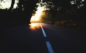 Wallpaper road, light, trees, nature