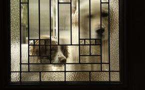 Picture dogs, house, the door
