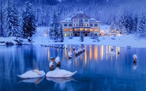 Wallpaper winter, snow, trees, birds, lake, house, ate, Alps, Italy, swans, forest