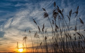 Picture the sky, nature, beauty, morning, reed