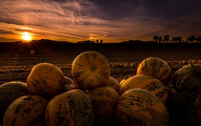 Picture field, night, pumpkin