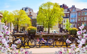 Picture bridge, bike, river, spring, Amsterdam, flowering, bridge, blossom, Amsterdam, flowers, old, spring, buildings, Netherlands, canal