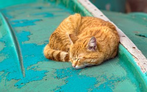 Picture cat, cat, background, stay, paint, color, sleep, red, contrast, sleeping, lies, turquoise