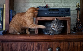 Picture cat, cats, grey, cats, the game, furniture, books, red, shelf, wardrobe, a couple, friends, striped, …