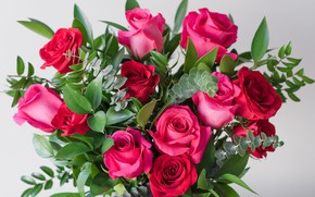 Picture roses, bouquet, raspberry