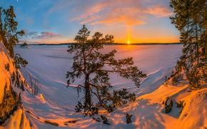 Picture sunset, Lake Ladoga, lake, Russia, pine, Karelia, trees, winter, snow, Ladoga, the snow