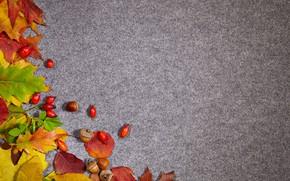 Picture autumn, leaves, background, briar, acorns